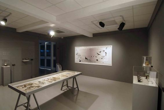 Specimens and diagrams featuring endangered bird species, presented in a large gallery space.