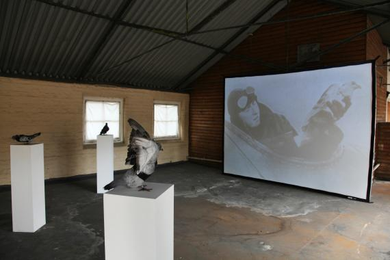 A gallery showing three taxidermied pigeons presented on plinths and a projection of a film.