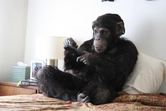 Rachel Mayeri, Primate Cinema; Apes as Family (still), eBook