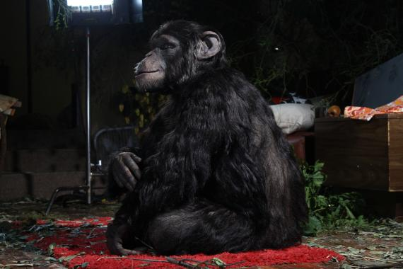 Rachel Mayeri, Primate Cinema: Apes as Family, (still) 2011 bedroom