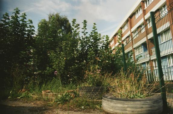 an overgrown garden with plants including grasses, shrubs and huge weeds is situated in front of a low rise 1970's towerblock courtyard. It is a summer day with warm lighting